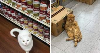 10 котів, які влаштувалися в магазини – і працюють краще за людей: кумедні фото