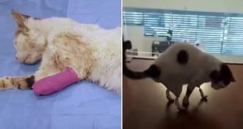 Замість втрачених лапок: як у Греції коту подарували можливість ходити – відео