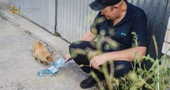 Український рятувальник напоїв бездомного кота водою: наймиліше фото дня