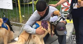 Будь ласка, погладь мене: собаки допомагали людям пережити горе через обвал будинку у Флориді