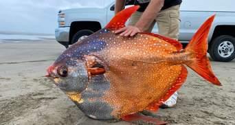 Рідкісну місячну рибу вимило на пляж в Орегоні: що з нею зроблять вчені – фото