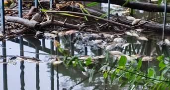 Ймовірно, хімічні скиди: у Голосіївському парку в Києві на ставках масово загинули птахи та риба