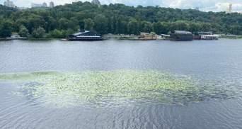 Дніпро у Києві заростає зеленню: еколог пояснив чи є небезпека