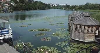 У Вінниці вирощують 16 видів лілій на одній водоймі: для містян влаштували фотосесію – відео