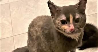 Материнська самопожертва: кішка кинулася у вогонь, аби врятувати кошенят