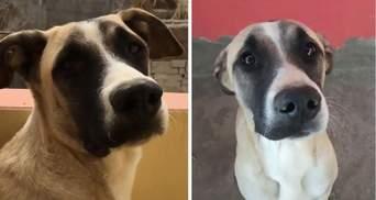 Чекає аж до ночі: чому вірний пес цілий день визирає свого власника на балконі
