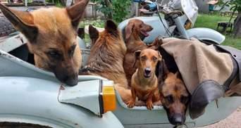 """5 собак, 1 мотоцикл, річка і улюблений """"татко"""": секрет щасливих улюбленців із Черкащини"""