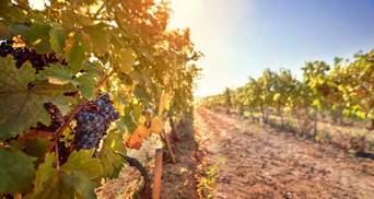 Безалкогольне, крафтове та емоційне: Україна активно розвиває свій потенціал виноробства