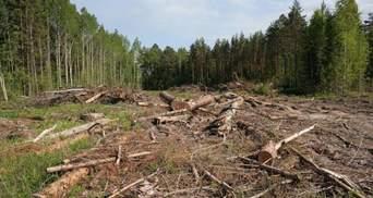 Грабили во время пожаров: на Луганщине служащие зарабатывали миллионы на вырубке леса