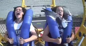 На атракціоні в США чайка врізалася в дівчину на шаленій швидкості: моторошне відео