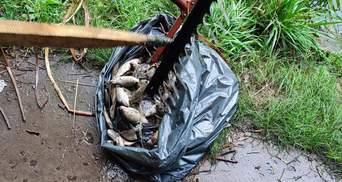 Гибель птиц и рыбы в прудах Голосеевского парка: эксперты подтвердили отравление химикатами