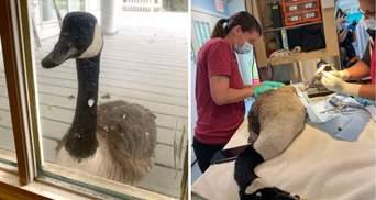 Гуска прийшла до лікарні провідати свого бойфренда: мила історія з фото