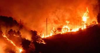У  трьох регіонах Іспанії вирують масштабні лісові пожежі: фото, відео