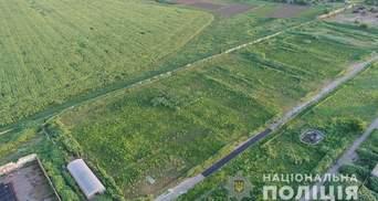 На Херсонщине обнаружили огромную плантацию конопли на сотни миллионов гривен: фото