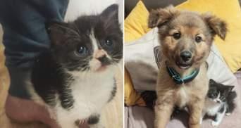 Котенок дружит со всеми на свете, лишь бы не оставаться одному: милая история