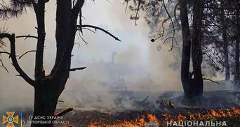 Пожежа на острові Хортиця: поліція проводить перевірку