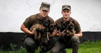 5 маленьких вівчарок взяли на службу в Національну гвардію України: фото