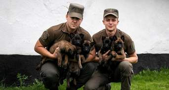 5 маленьких овчарок взяли на службу в Национальную гвардию Украины: фото