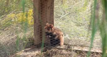 Київський зоопарк постачає хом'яків у дику природу: для чого це потрібно