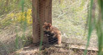 Киевский зоопарк поставляет хомяков в дикую природу: для чего это нужно