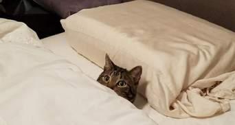 Сплять, як люди: милі й кумедні фото котиків, які вміють відпочивати правильно