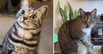 Актори без Оскара: неперевершені фото собак і котів, які грають драматичні ролі