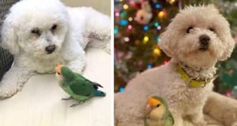 Ніколи не розлучаються: собака і папуга стали найкращими друзями – фото