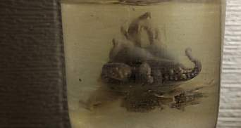 На розкопках у центрі Одеси знайшли восьминога в банці: фото