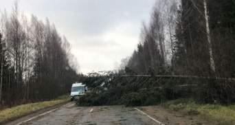 Деревья падали как спички: по России пронесся смертоносный ураган – видео