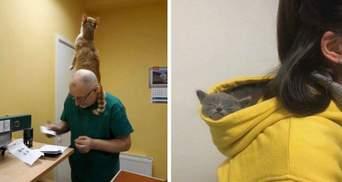 Виховали своїх господарів: 10 смішних фото справді нахабних котиків