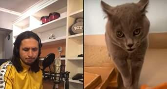 Музикант The Kiffness перевипустив мегапопулярний трек зі злим котом: відео