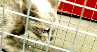 Кошку из киевской подземки поймали: теперь она ищет дом