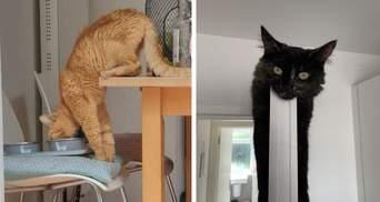 Щось пішло не так: ці кумедні тварини вміють здивувати своїх власників – фото