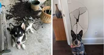 """Погані хлопчики: фото собак, які щойно вчинили """"злочин"""" і зовсім не шкодують"""