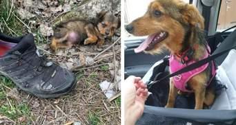Цуценя жило в покинутому черевику: чим закінчилася щемлива історія  – фото