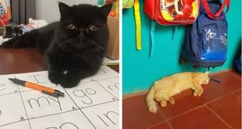 Ці коти вже зібралися до школи: кумедні фото улюбленців, які хочуть вчитися