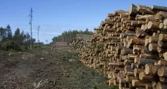 Чиновники отправляли на экспорт: на Буковине продавали лес с заповедной территории