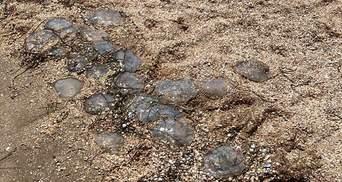 Мертвые медузы и водоросли заполонили популярный пляж на Херсонщине: шокирующие видео