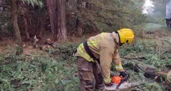 Гроза разгулялась: из-за непогоды на Херсонщине деревья завалили 4 километра дороги
