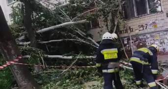 Разбило окна и застряло: в Днепре на дом упало дерево