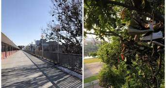 Студенты Университета Миннесоты забрасывают свою обувь на дерево – и никто не знает, почему