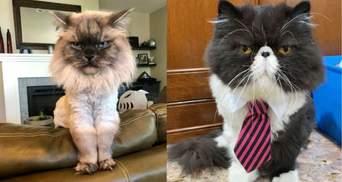 Почти как Grumpy Cat: 10 котиков с очень печальными мордами – курьезные фото