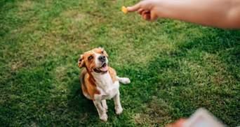 Які методи дресирування небезпечні для собак: вчені провели дослідження