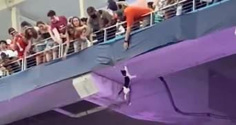 В США болельщики героически спасли кота, который сорвался с верхнего яруса стадиона: видео