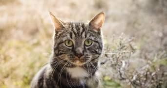 Как у кошек появились полоски: интересное объяснение ученых