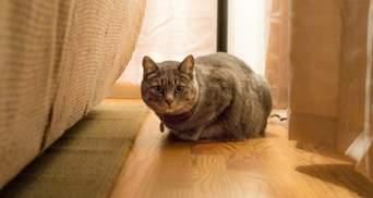 Як допомогти коту пристосуватися у новому домі після переїзду