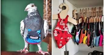 Розкіш для птахів: жінка витрачає понад 5000 доларів в рік на костюми для голубів