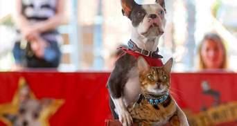 Самі придумали трюк: кіт з собакою проїхалися на самокаті й потрапили до книги рекордів Гіннеса