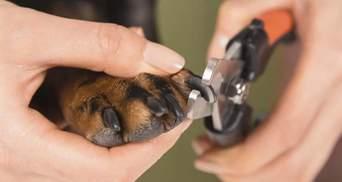 Без скавчань і опору: австралійка поділилася лайфхаком як підстригти кігті собаці