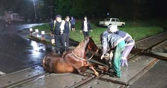 Застрял между путями: на Волыни для спасения лошади пришлось останавливать поезд